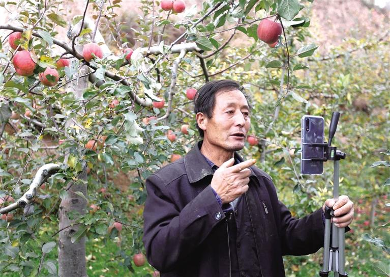 礼县苹果5分钟卖出1.3万斤