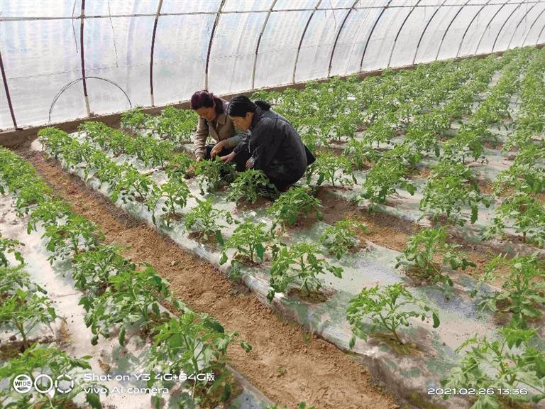 皋兰县计划完成春播面积21.18万亩