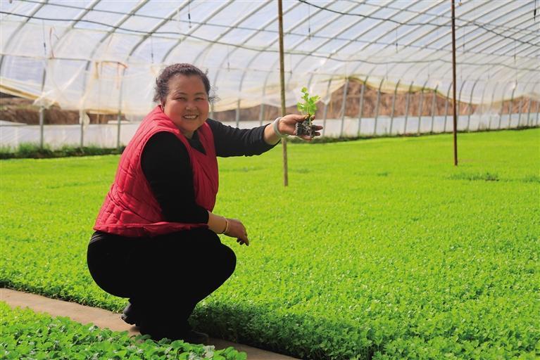 榆中县掀起万亩蔬菜大田移栽高潮